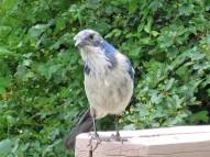 bird1a