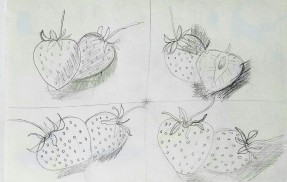 strawberries.drawing