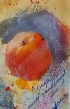 apricot1a