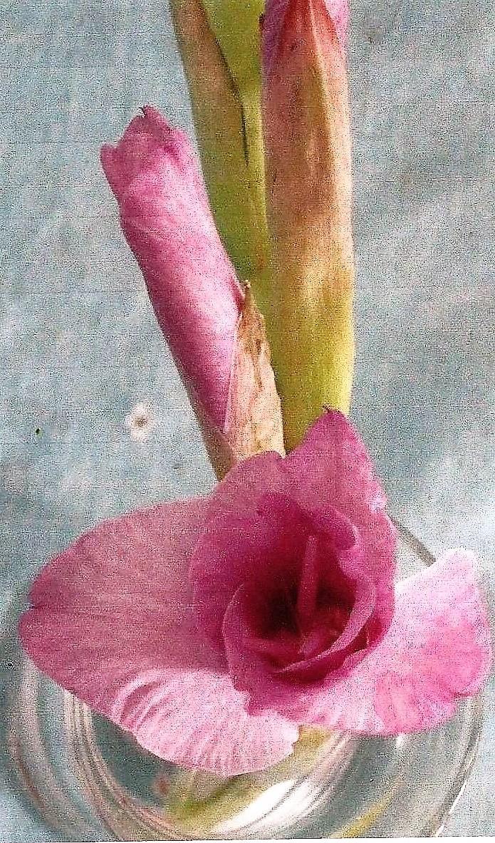 floralballerina2