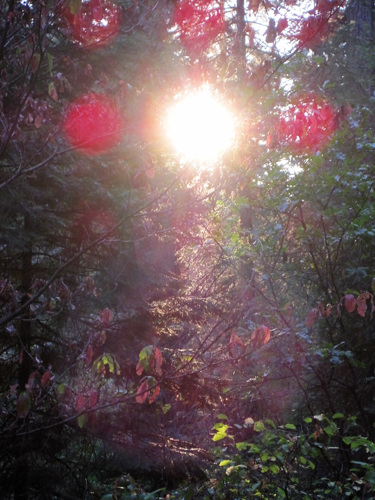 Orbs in the forest