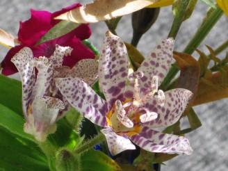 flowergarden.2014