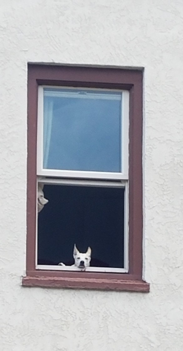 doginthewindow.2018.jpg